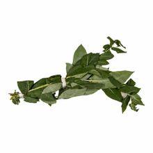 eucalipto-atado-kg