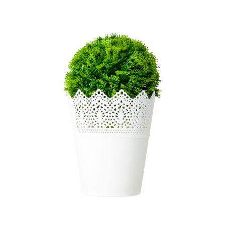 macetas-con-planta-viva-home